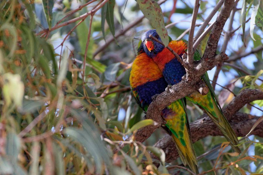 Fraser Island VK4NM/P Tourist attractions spot