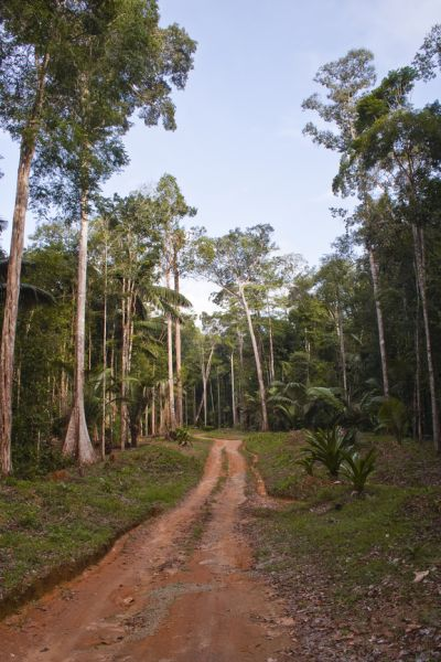 French Guiana TO5BR DX News