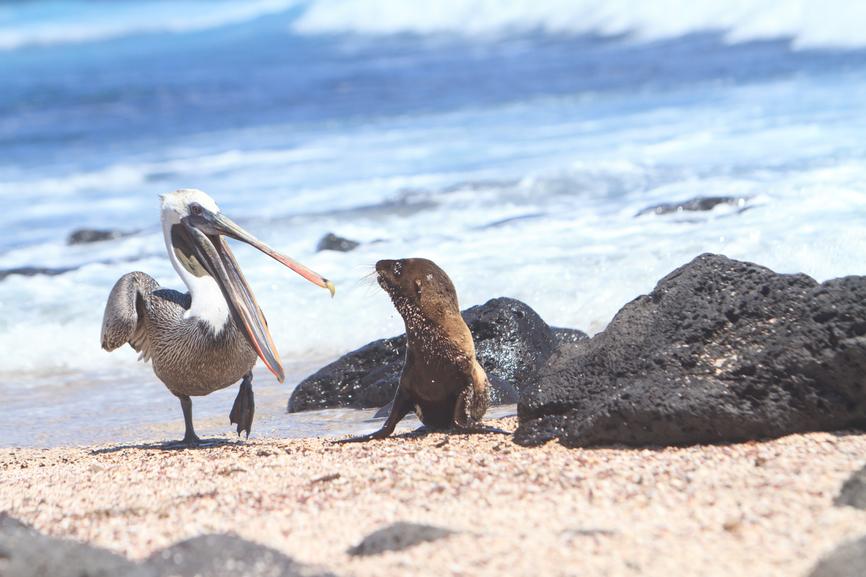 Galapagos Islands HC2AO/8