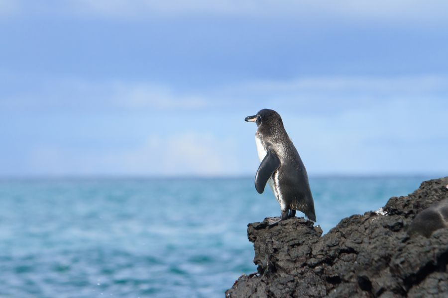 Galapagos Islands HC8/LU9EFO Tourist attractions