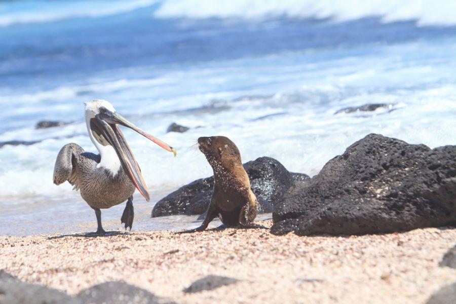 Galapagos Islands HC8/LU9EFO
