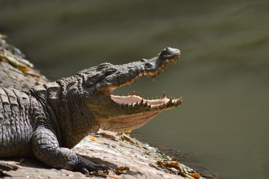 Gambia C5FUD C5GCJ Katchikally Crocodile Pool.
