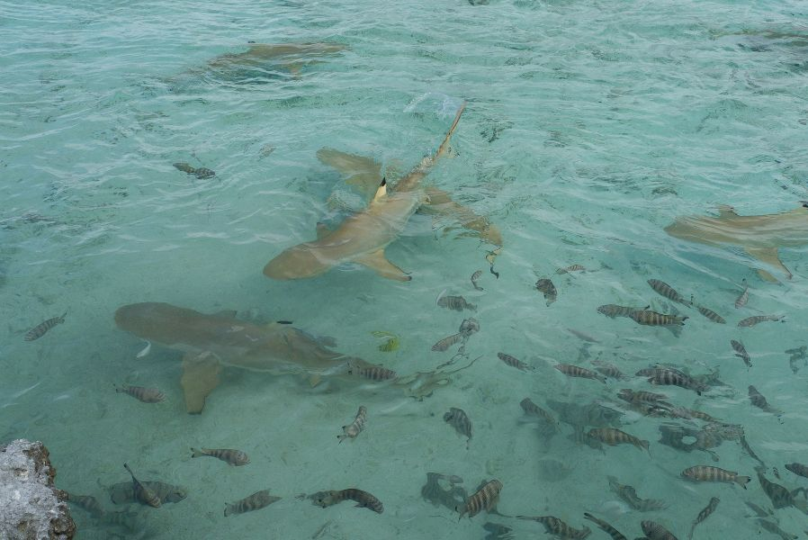 Gambier Islands Mangareva Islands FO4BM/P FO8AA/P Tourist attractions
