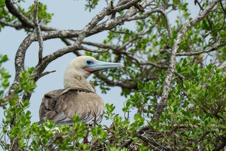 Gambier Islands Mangareva Islands FO4BM/P FO8AA/P