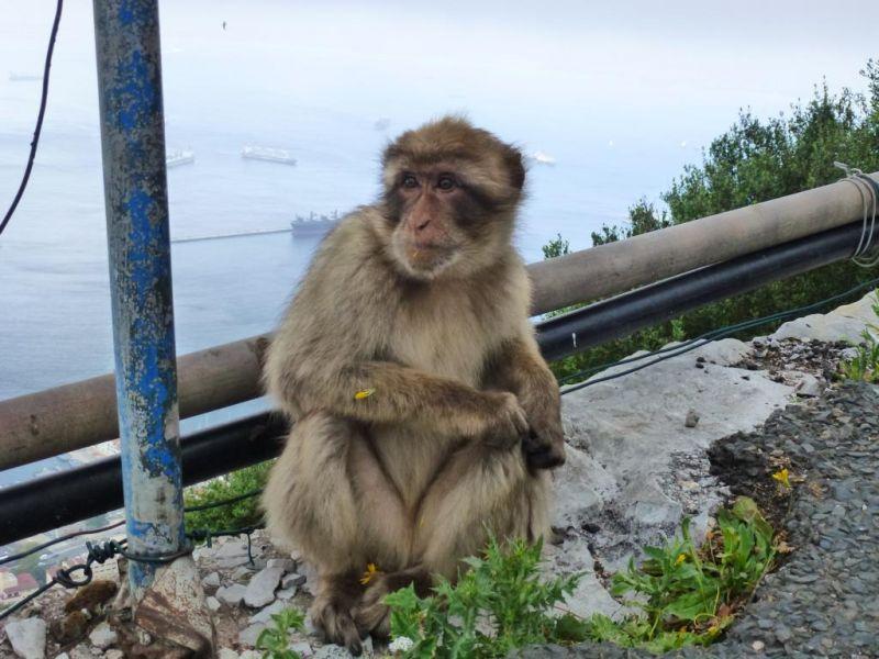 Gibraltar ZB2/VA3ITA DX News