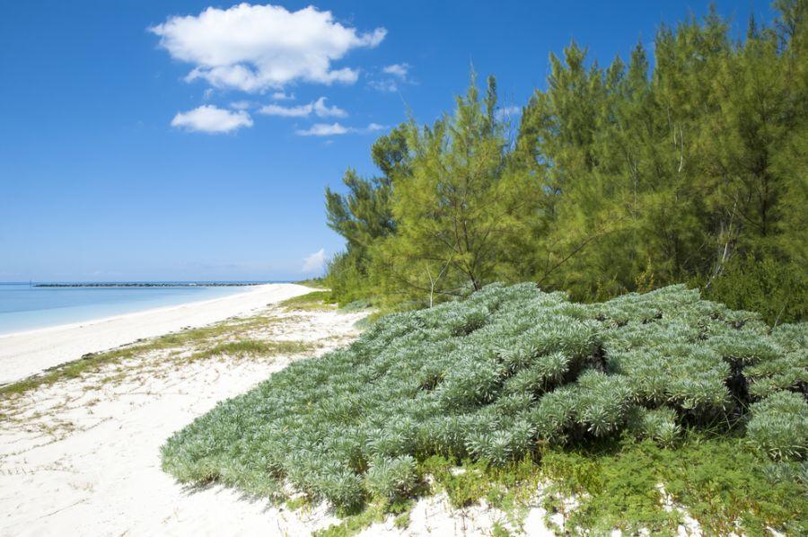 Остров Большой Багама C6ASL Туристические достопримечательности