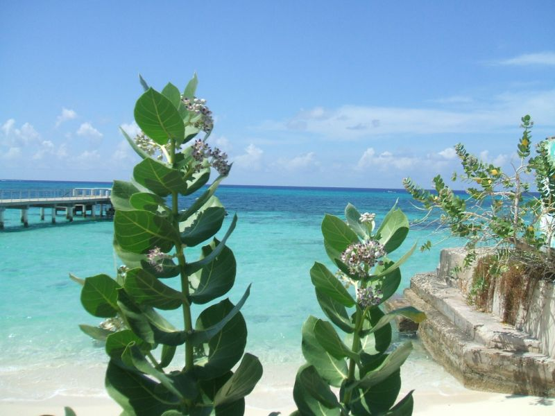 Grand Turk Island VP5/G3SWH Turks and Caicos