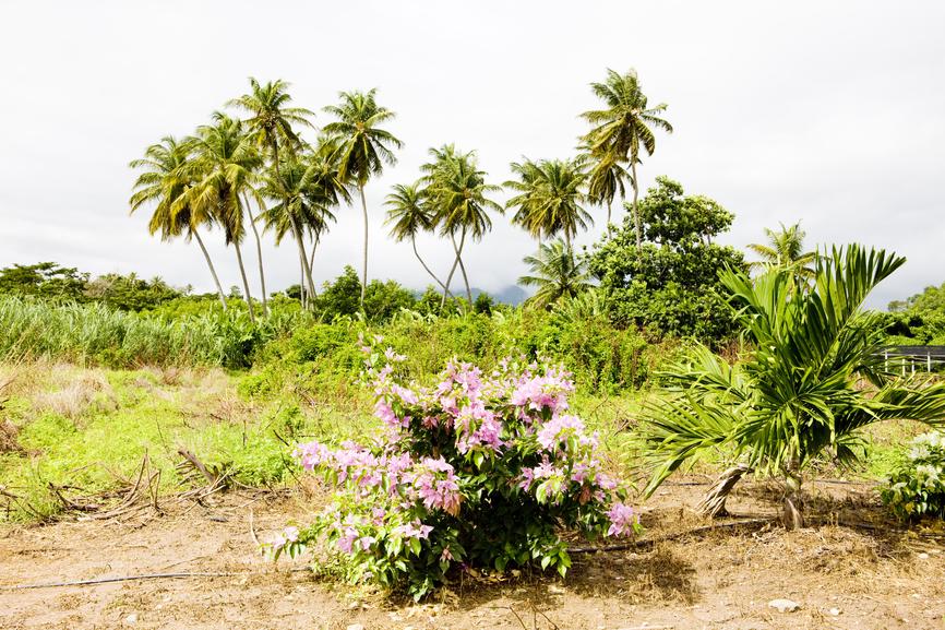 Остров Гренада J38NN J38MM