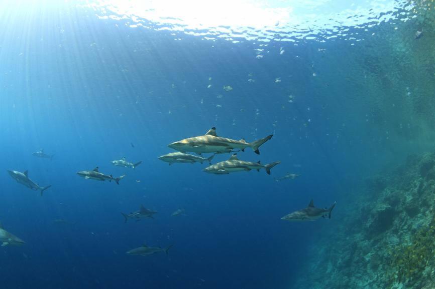 Остров Гуадалканал Соломоновы острова H44QQ DX Новости