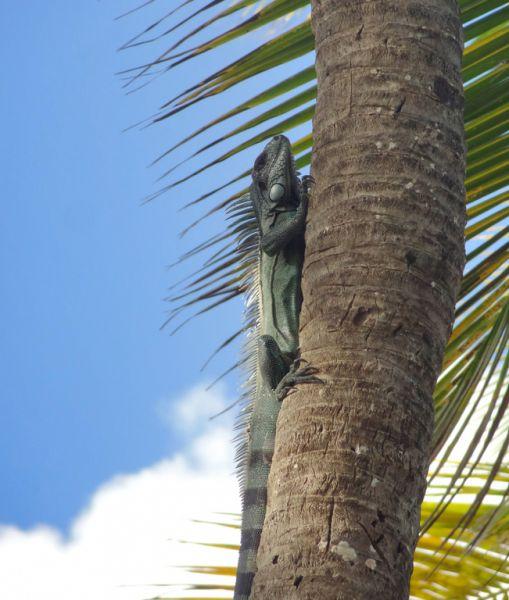 Guadeloupe FG/PH9B Tourist attractions
