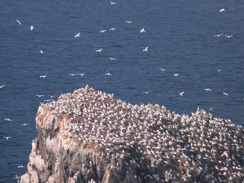 Guernsey Island GU9V Tourist attractions spot Gannet colony.