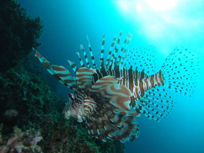 Hachijo jima Island JI1LPF/1 JA1UNS/1 7N4VPS/1 7L4PVR/1 DX News