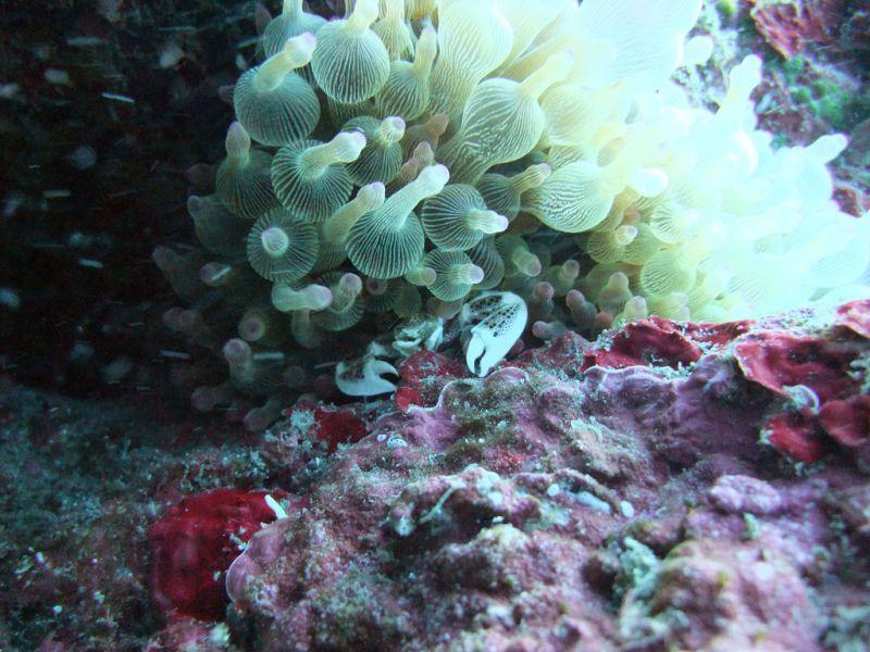 Hachijo jima Island JI1LPF/1 JA1UNS/1 7N4VPS/1 7L4PVR/1 Tourist attractions spots