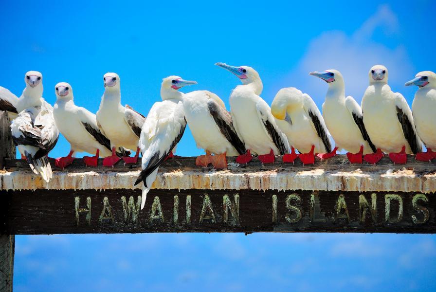Гавайские острова KH6/M0GDX Туристические достопримечательности