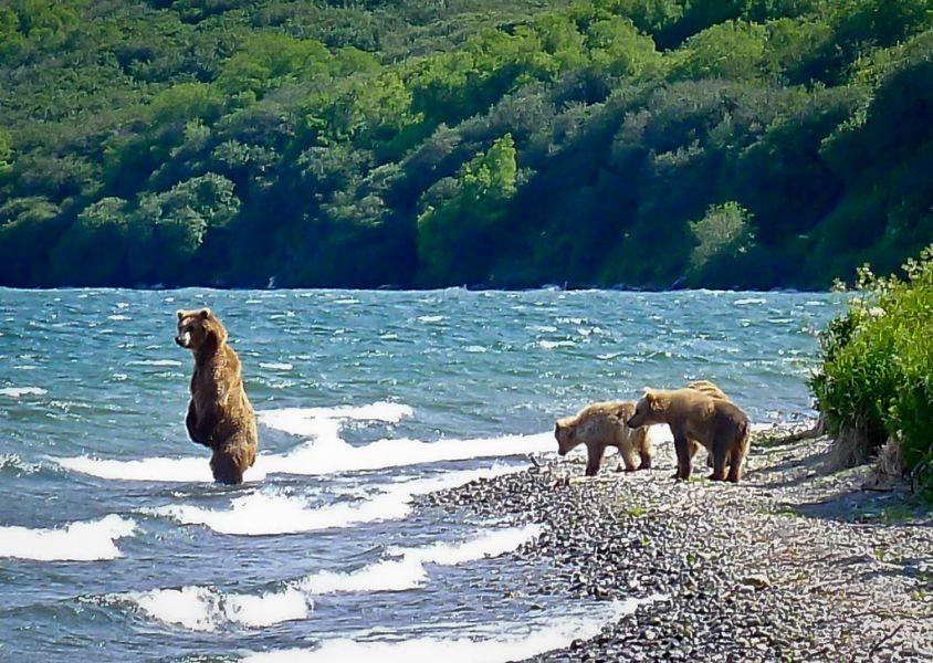 Камчатка RZ0ZWA/P Медведи