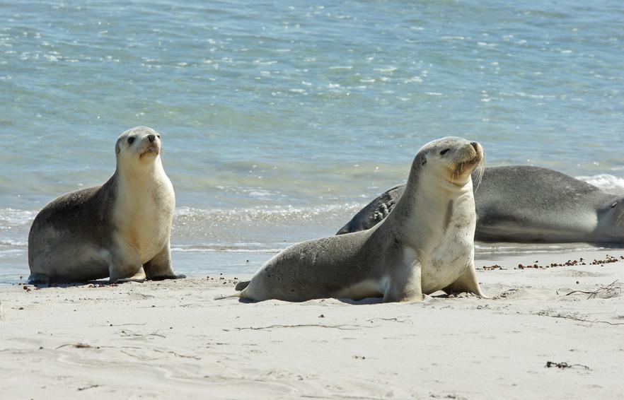 Kangaroo Island VK4AAC/5 DX News