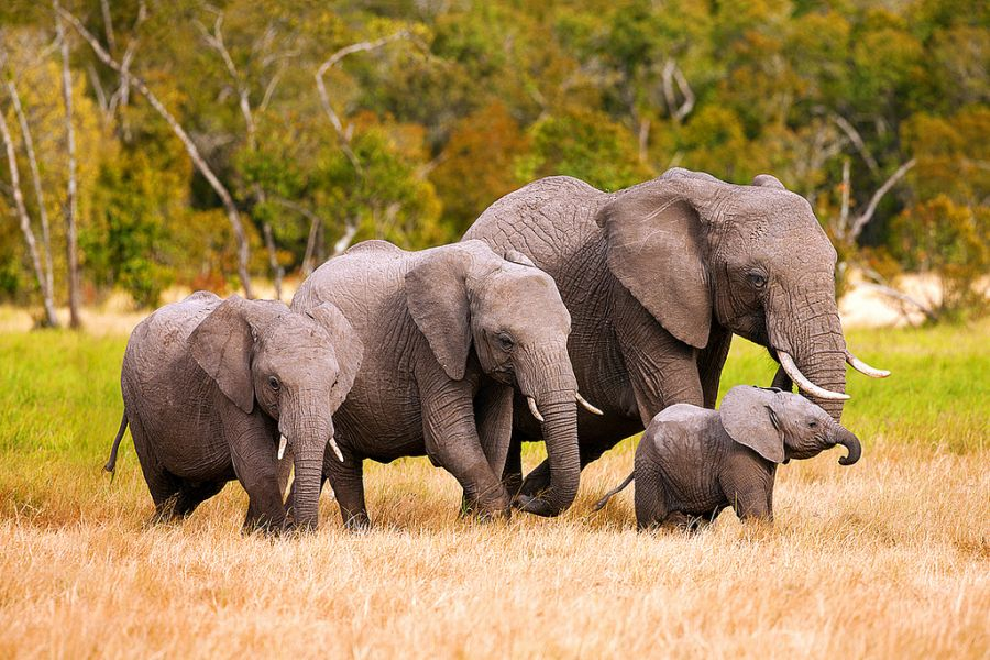 Kenya 5Z4/DL7KL 5Z4/DJ6TF Tourist attractions spot Elephants Family.