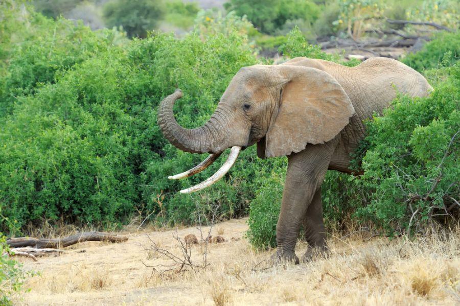 Kenya 5Z4HW Elephant in the wild - national park