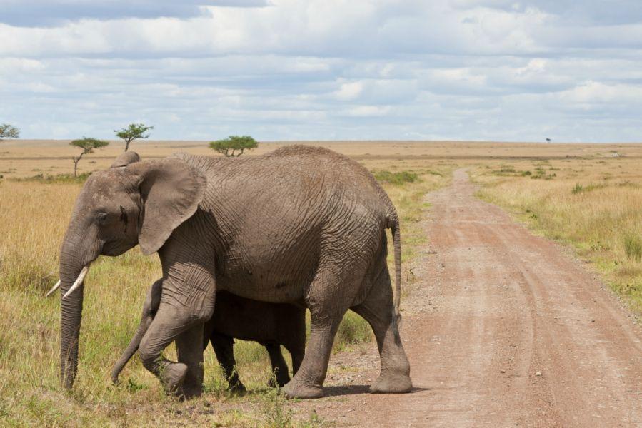 Кения 5Z4/IK2YDJ Туристические достопримечательности