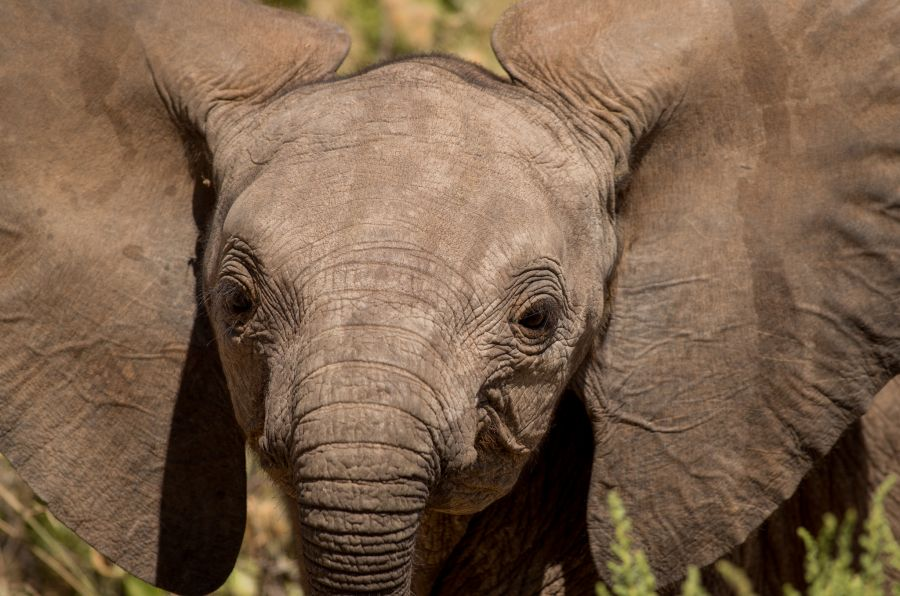 Kenya 5Z4/IW5BBV DX News Elephant