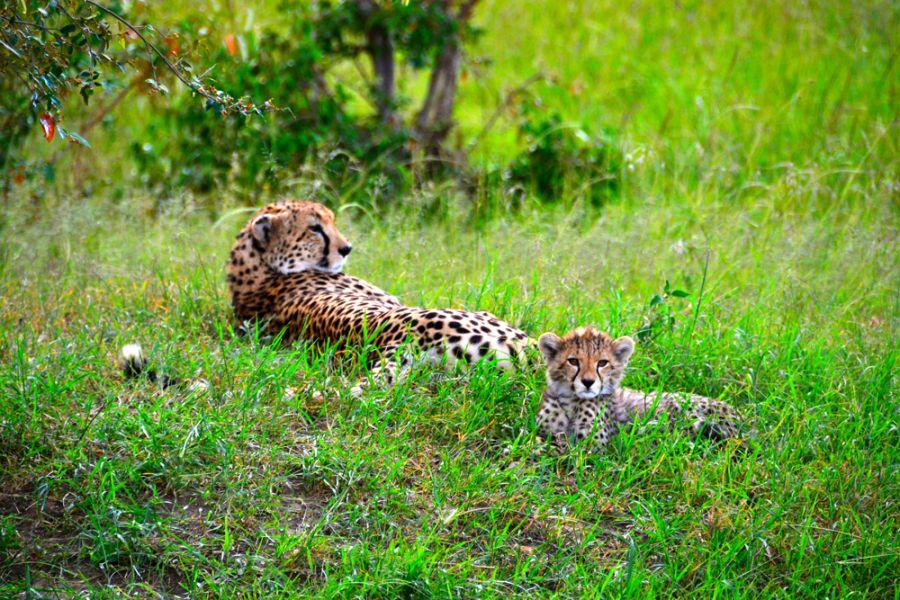 Kenya 5Z4/IW5BBV Masai Mara