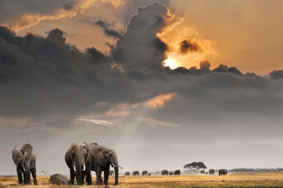 Kenya 5Z4/TA1HZ DX News African sunset with elephants.