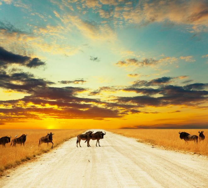 Kenya 5Z4/TA1HZ Antelope gnu crowd.