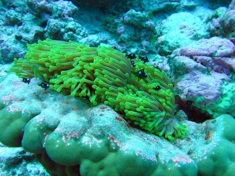 Kingman Reef KH5 DX News ARRL