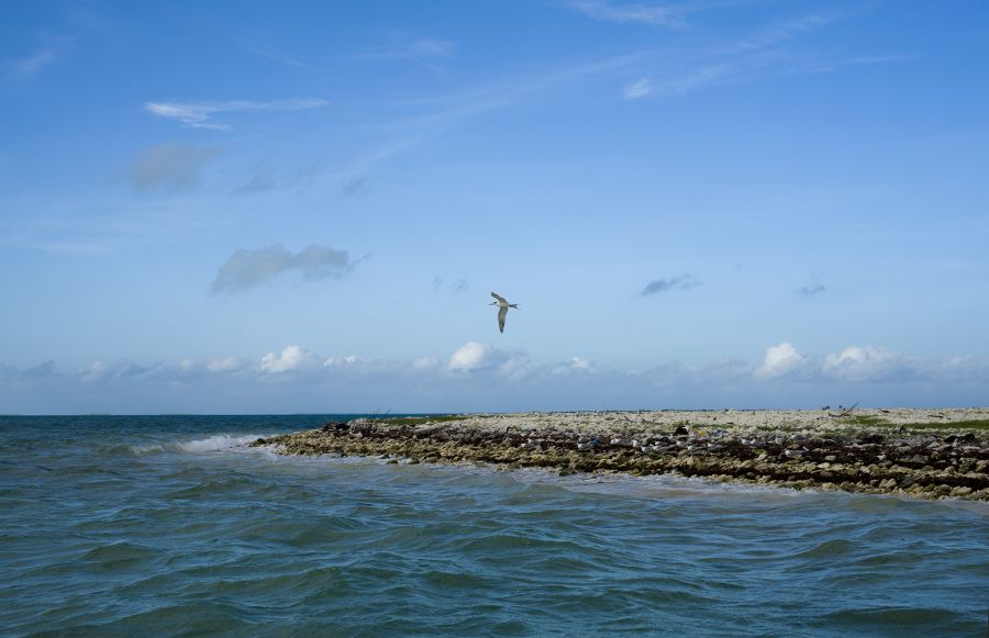 Kiritimati Christmas Island T32RL DX News