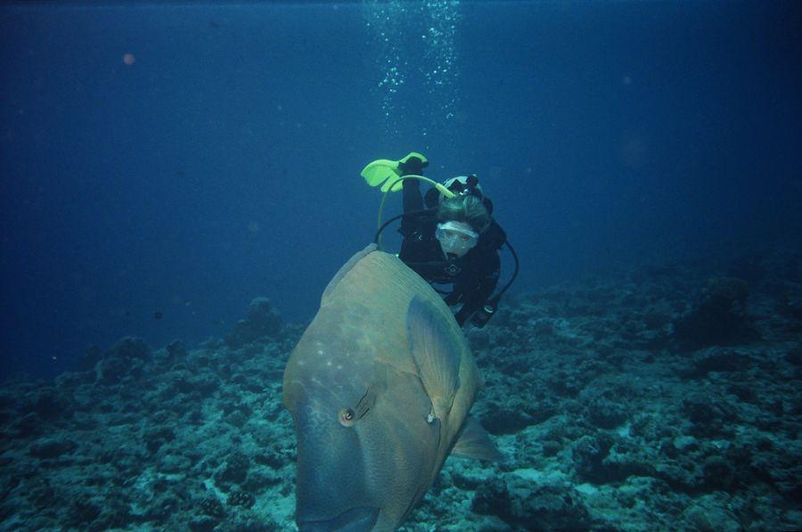 Koror Island T88AB Palau Diving.