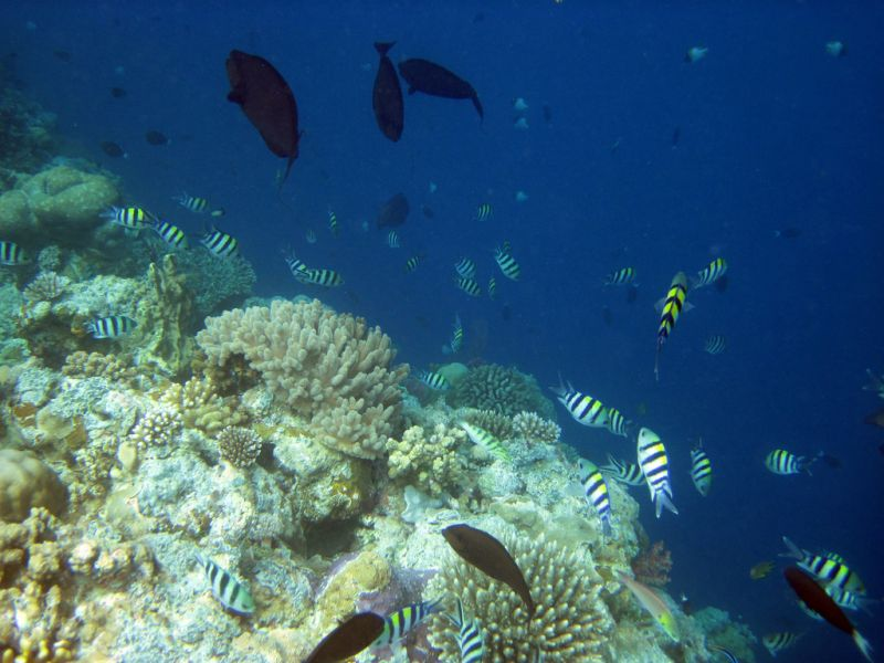 Koror Island T88ER Tourist attractions Palau