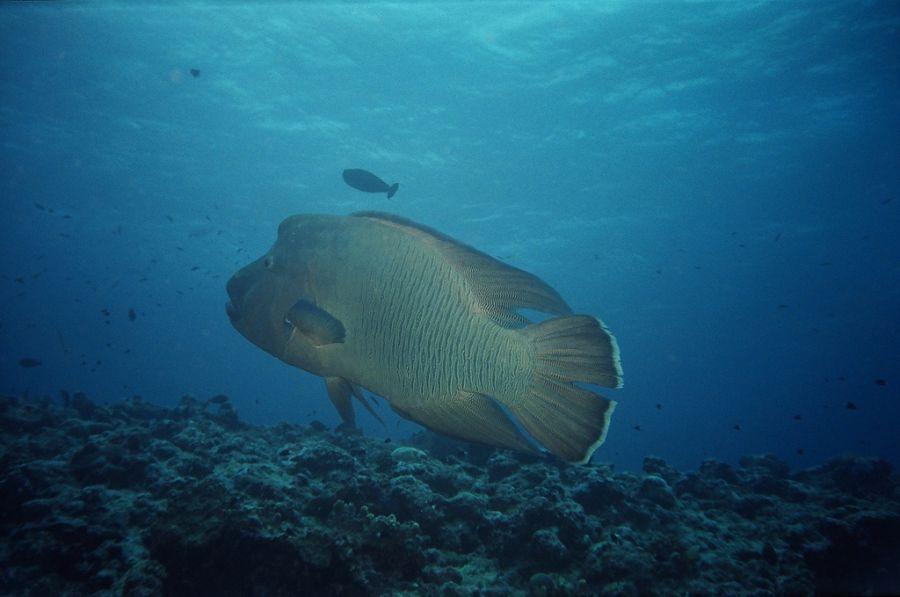Остров Корор Палау T88UW Туристические достопримечательности
