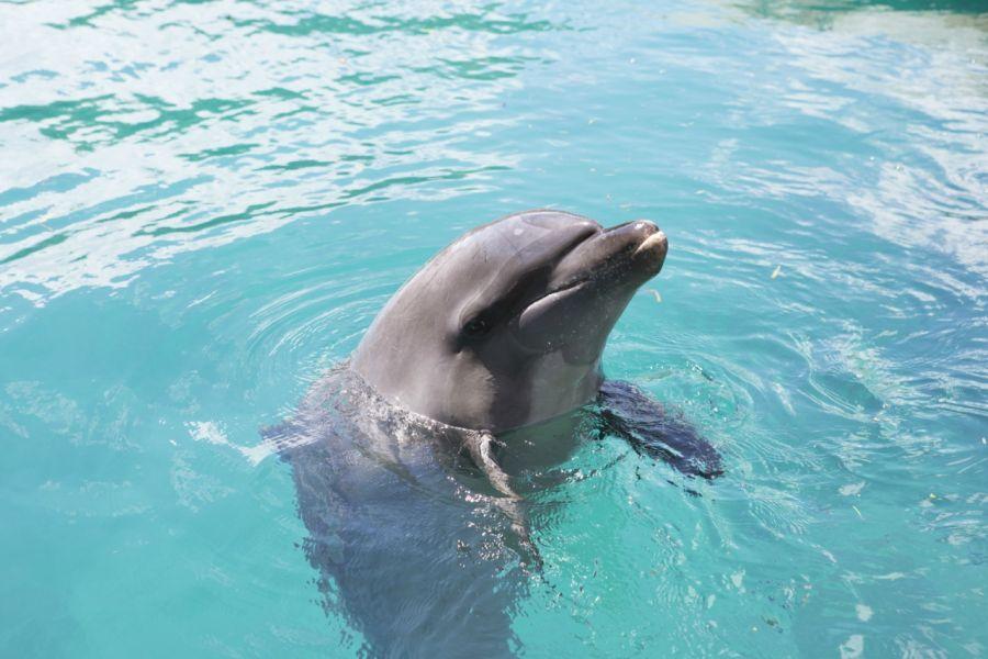 Koror Island Palau T88VW Dolphin DX News