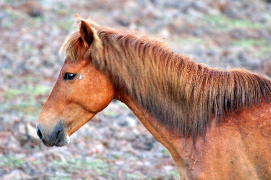 Остров Крокер Дикая лошадь