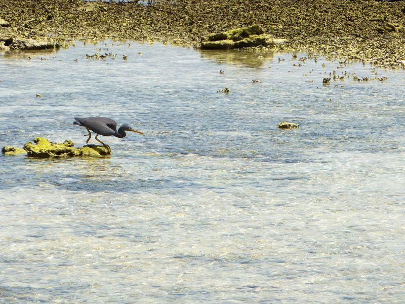 Lady Elliot Island VK4/F9IE Tourist attractions Spot Heron shading.