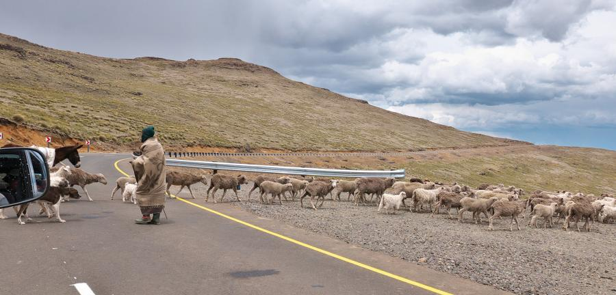 Лесото 7P8NO DX Новости Бобаци