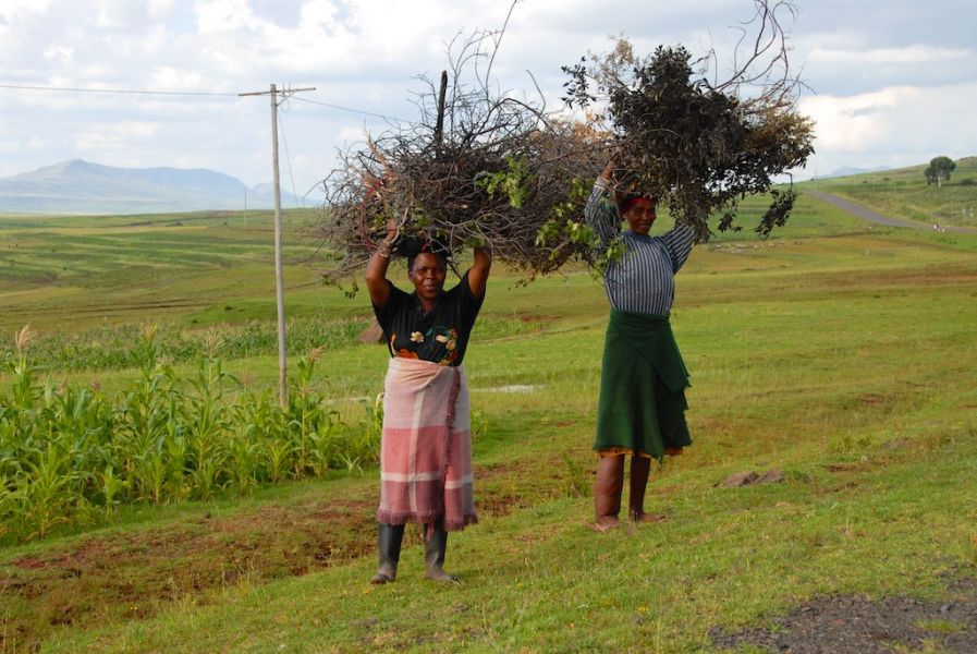 Lesotho 7P8VR Hard Working Women.