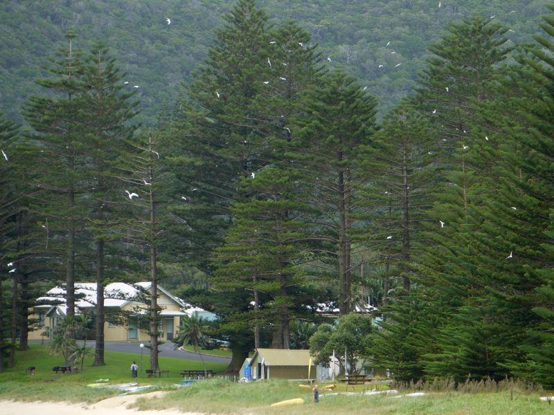 Lord Howe Island VK9L/G7VJR DX News