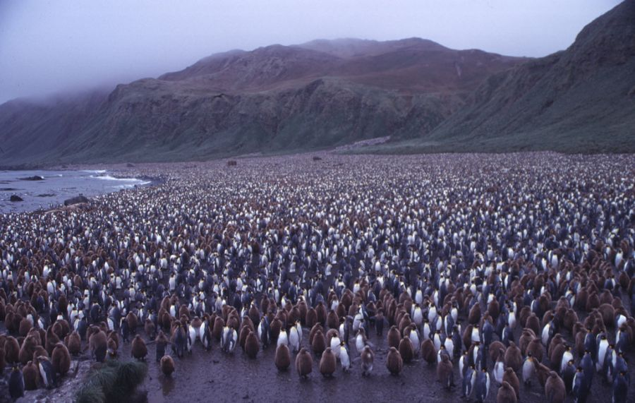 Macquarie Island VK0MH Tourist attractions