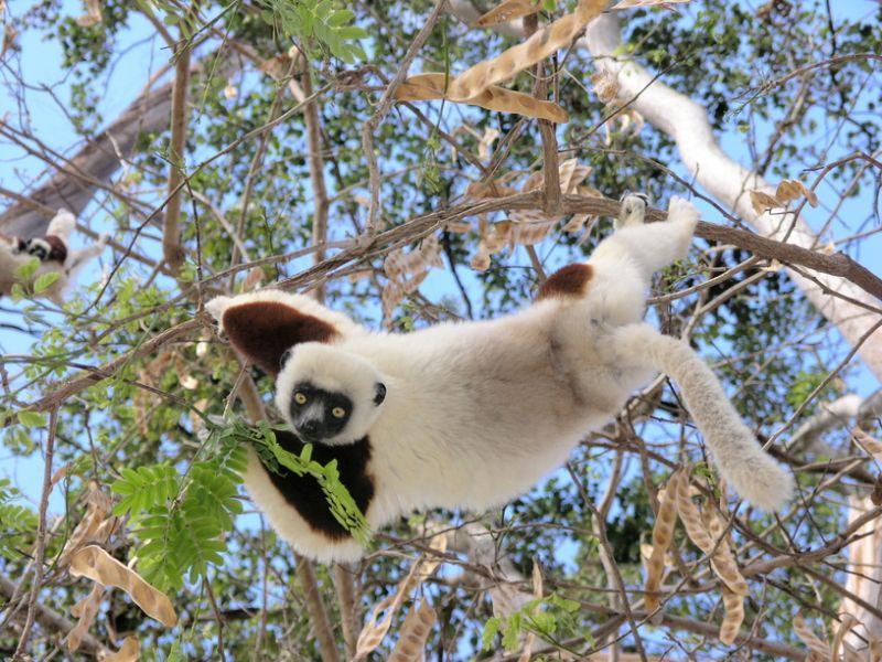 Madagascar 5R8DX