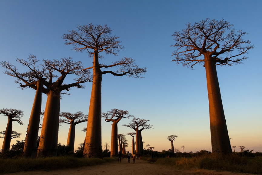 Madagascar Island 5R8SV