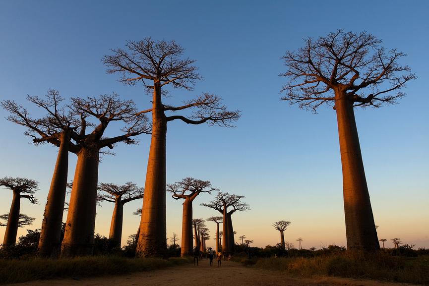 Остров Мадагаскар 5R8SV