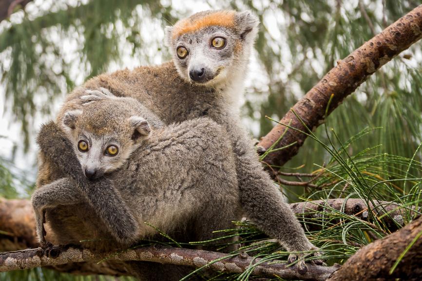 Остров Мадагаскар 5R8SV DX Новости
