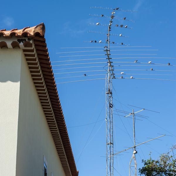 Остров Мадейра КВ и УКВ антенны CT3HF, к сожалению, привлекательны для птиц