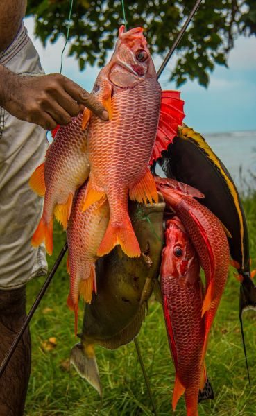 Mahe Island Seychelles S79V Tourist attractions spot Daily Catch.