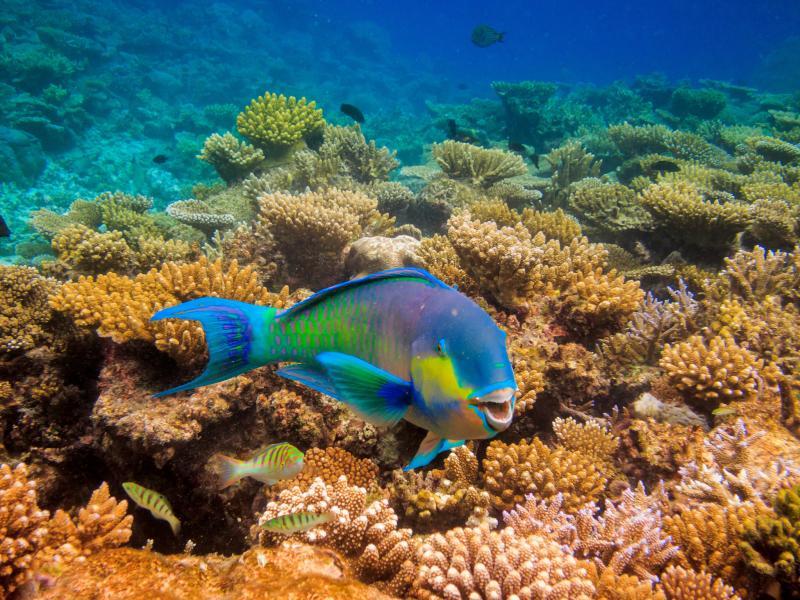 Мальдивские острова 8Q7MD Подводный мир