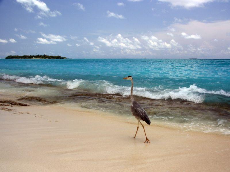 Maldive Islands 8Q7PS Tourist Attractions