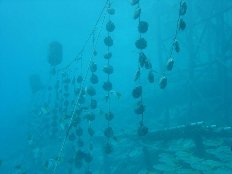 Manihiki Atoll E51UFF North Cook Islands DX News