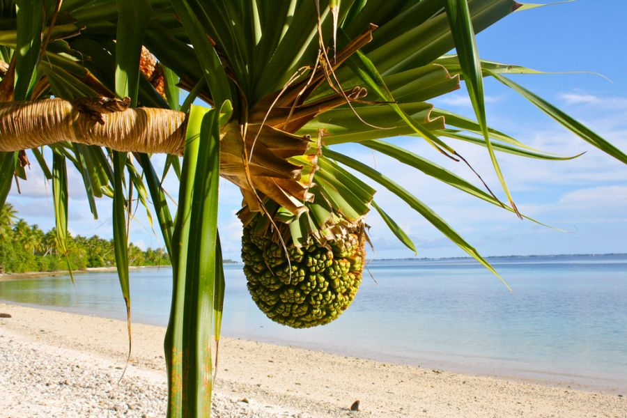 Остров Маджуро Маршалловы острова V7A V73EME Туристические достопримечательности