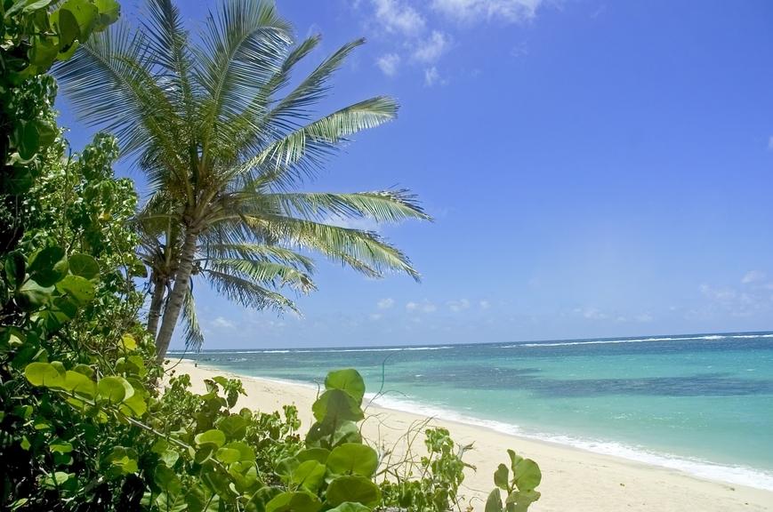 Martinique Island FM/F2VX FM/F9IE DX News